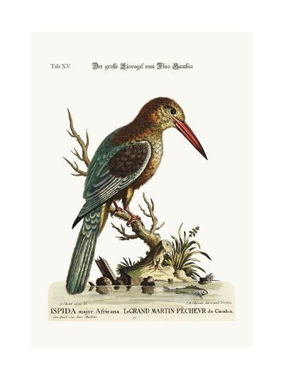 The Great Kingfisher from the River Gambia, 1749-73-George Edwards-Giclee Print