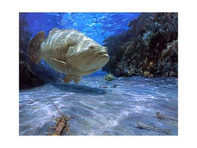 The Great Presence, 2001: a Massive Goliath Grouper Cruises its Rocky Habitat in Search of Food-Stanley Meltzoff-Giclee Print