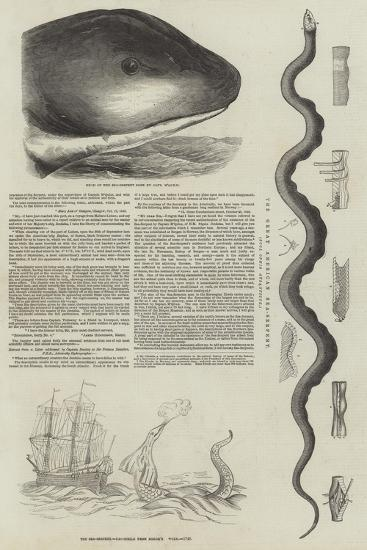 The Great Sea-Serpent--Giclee Print