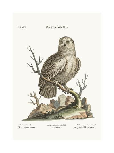 The Great White Owl, 1749-73-George Edwards-Giclee Print