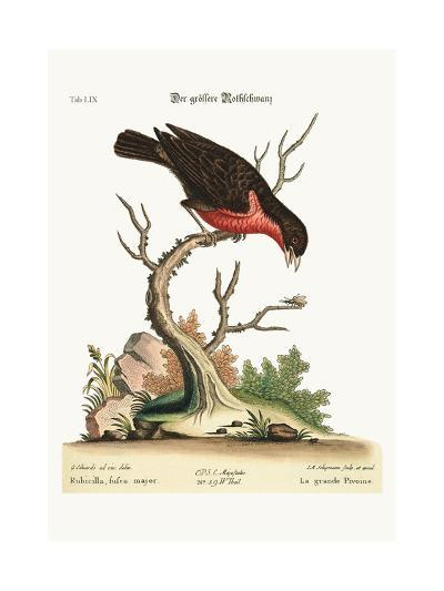The Greater Bullfinch, 1749-73-George Edwards-Giclee Print