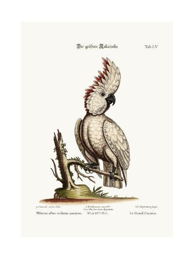 The Greater Cockatoo, 1749-73-George Edwards-Giclee Print