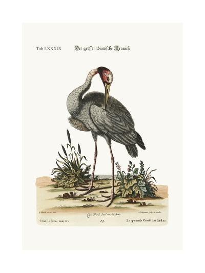 The Greater Indian Crane, 1749-73-George Edwards-Giclee Print