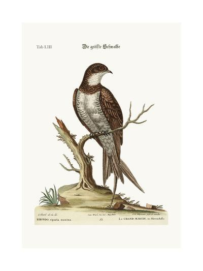 The Greatest Martin or Swift, 1749-73-George Edwards-Giclee Print