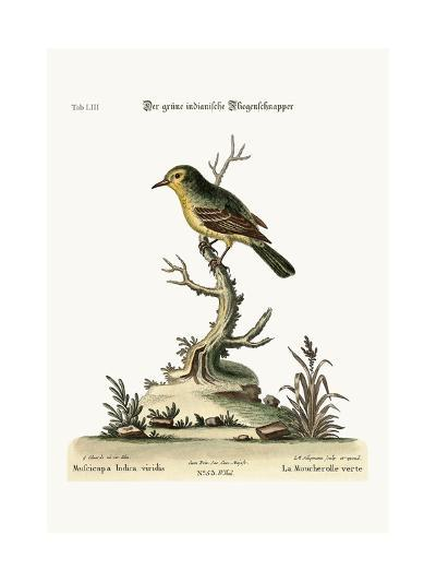 The Green Indian Flycatcher, 1749-73-George Edwards-Giclee Print