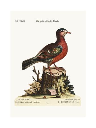 https://imgc.artprintimages.com/img/print/the-green-winged-dove-1749-73_u-l-pul6de0.jpg?p=0