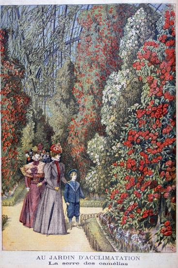 The Greenhouse of the Camellias, Zoological Gardens, Paris, 1897-Henri Meyer-Giclee Print