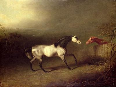 The Grey Arab-Sawrey Gilpin-Giclee Print