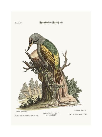 The Grey-Headed Green Woodpecker, 1749-73-George Edwards-Giclee Print