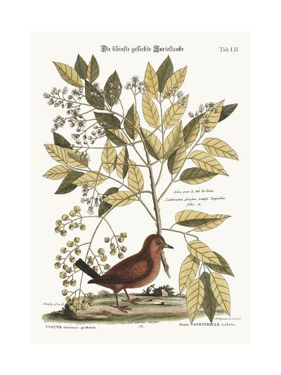 The Ground Dove, 1749-73-Mark Catesby-Giclee Print
