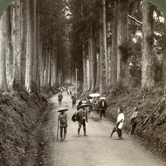 The Groves Were God's First Temples, Avenue of Noble Cryptomerias at Nikko, Japan, 1904-Underwood & Underwood-Photographic Print