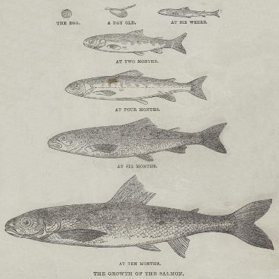 The Growth of the Salmon--Giclee Print