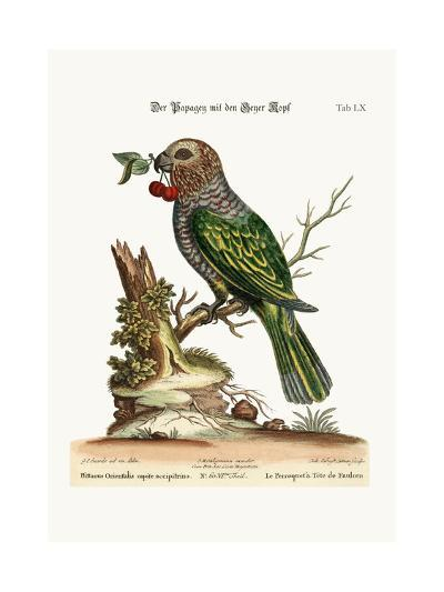 The Hawk-Headed Parrot, 1749-73-George Edwards-Giclee Print