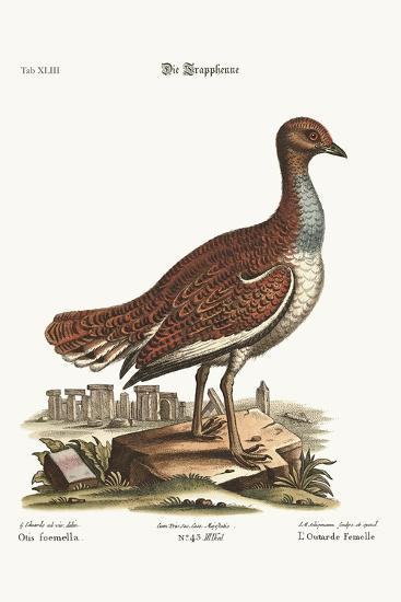 The Hen Bustard, 1749-73-George Edwards-Giclee Print
