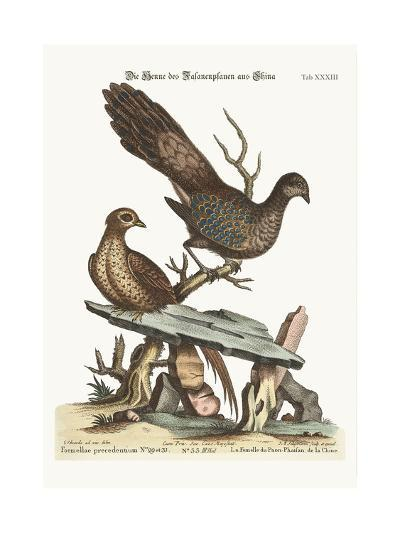 The Hen Peacock Pheasant from China, 1749-73-George Edwards-Giclee Print