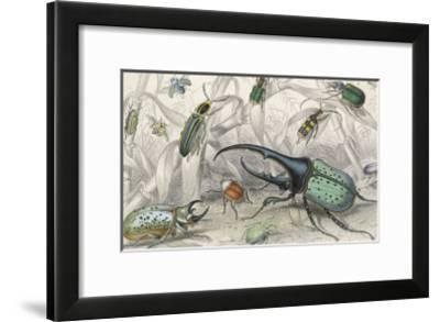 The Hercules Beetle Scarabaeus Tityus And Others Depicted In Their Natural Habitat Giclee Print By J Bishop Art Com