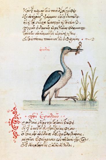 The Heron, 1564--Giclee Print