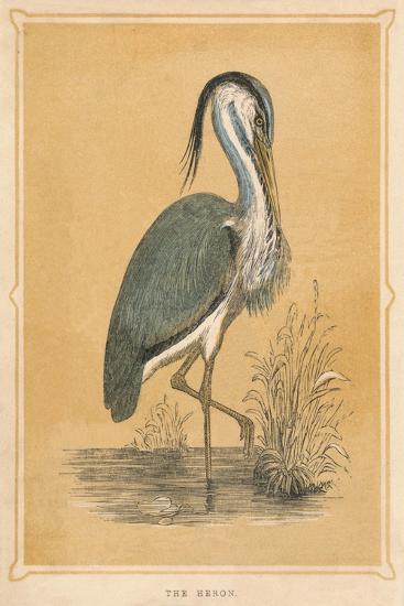 'The Heron', (Ardeidae), c1850, (1856)-Unknown-Giclee Print
