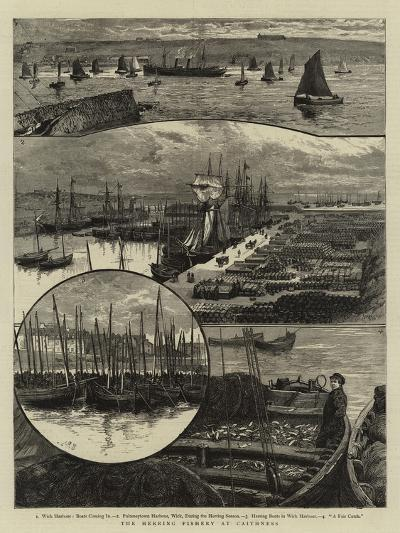 The Herring Fishery at Caithness--Giclee Print