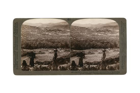 The Hill of Samaria, from the South, Surrounded by its Fig and Olive Groves, Palestine, 1900-Underwood & Underwood-Giclee Print