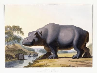 The Hippopotamus, 1804-Samuel Daniell-Giclee Print