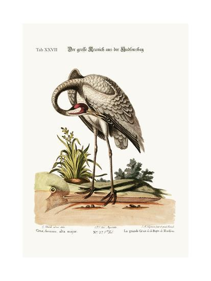 The Hooping-Crane from Hudson's Bay, 1749-73-George Edwards-Giclee Print