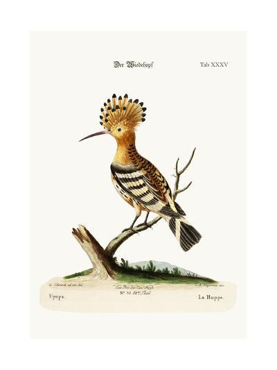 The Hoopoe, 1749-73-George Edwards-Giclee Print