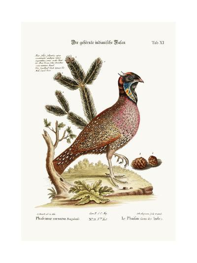 The Horned Indian Pheasant, 1749-73-George Edwards-Giclee Print