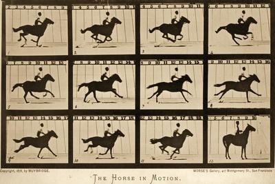 https://imgc.artprintimages.com/img/print/the-horse-in-motion-animal-locomotion-series-c-1878_u-l-puixyv0.jpg?p=0