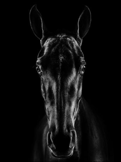 The Horse in Noir-Jackson Carvalho-Photographic Print