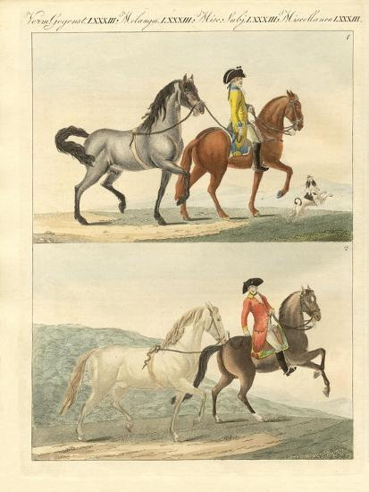 The Horse with its Different Kinds--Giclee Print