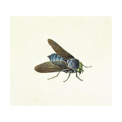 https://imgc.artprintimages.com/img/print/the-horsefly-18th-century_u-l-pl9m0t0.jpg?p=0