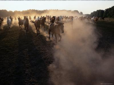 The Horses Run Home Through a Cloud of Dust-Sisse Brimberg-Photographic Print