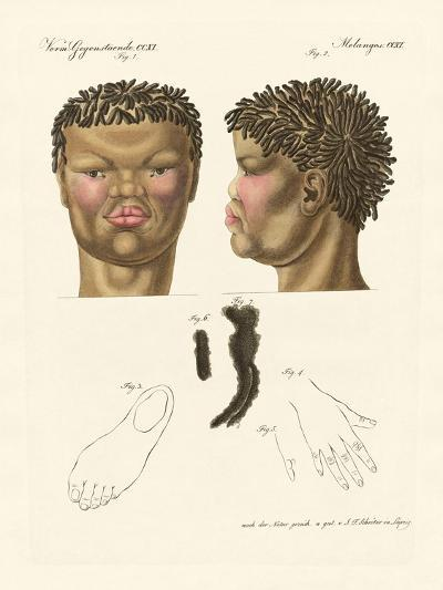 The Hottentot or Bushman--Giclee Print