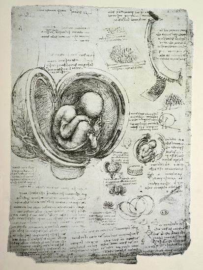 The Human Foetus in the Womb, Facsimile Copy-Leonardo da Vinci-Premium Giclee Print