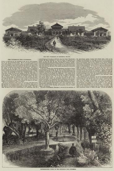 The Huningue Fish Nurseries--Giclee Print