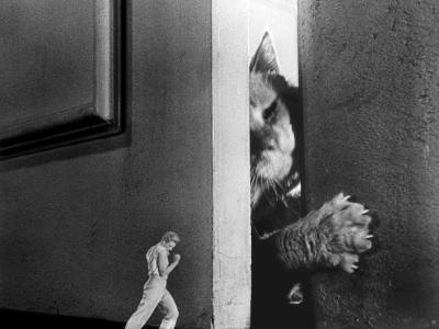 The Incredible Shrinking Man, Grant Williams, 1957--Photo