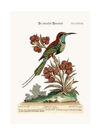 The Indian Bee-Eater, 1749-73-George Edwards-Giclee Print
