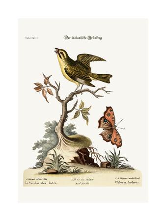 https://imgc.artprintimages.com/img/print/the-indian-greenfinch-1749-73_u-l-pul6dz0.jpg?p=0