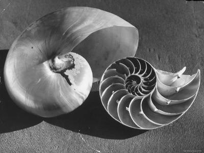 The Interior Design of the Shell-Fritz Goro-Photographic Print