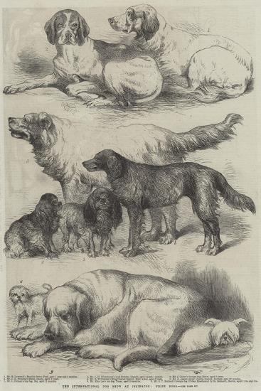 The International Dog Show at Islington, Prize Dogs-Harrison William Weir-Giclee Print