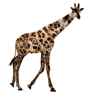 The Jaguar Patterned, Beautifully Confused Giraffe