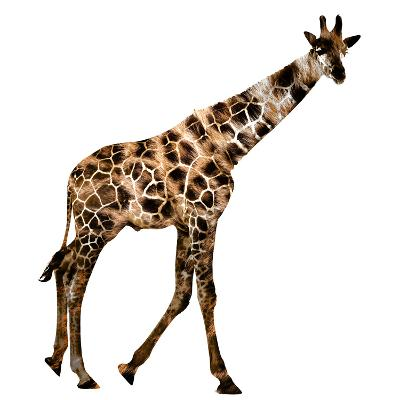 The Jaguar Patterned, Beautifully Confused Giraffe--Photographic Print