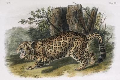 The Jaguar, Plate 101 from 'Quadrupeds of North America', Engraved by W.E. Hitchcock-John Woodhouse Audubon-Giclee Print