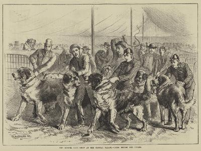 The Kennel Club Show at the Crystal Palace, Going before the Judges--Giclee Print