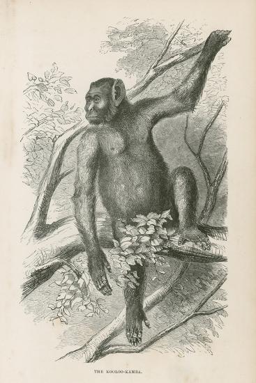 The Kooloo-Kamba--Giclee Print