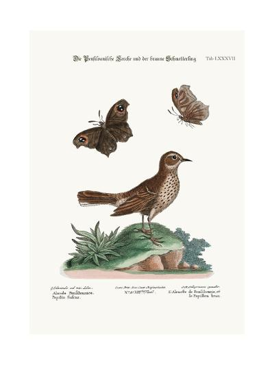 The Lark from Pensilvania, and the Brown Butterfly, 1749-73-George Edwards-Giclee Print