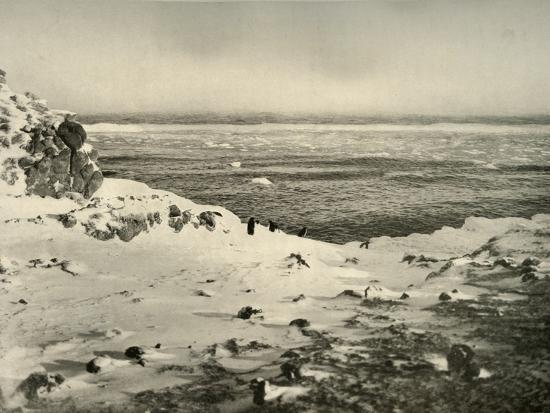 'The Last of the Penguins Just Before Their Migration in March', c1908, (1909)-Unknown-Photographic Print