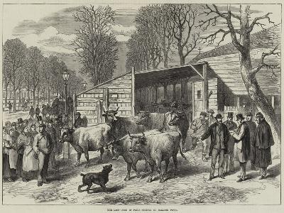 The Last Oxen in Paris--Giclee Print