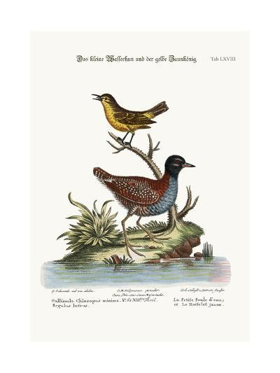 The Least Water-Hen, and the Yellow Wren, 1749-73-George Edwards-Giclee Print
